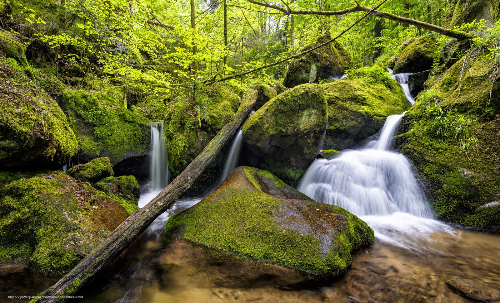 Скачать обои Gertelbach,  Black Forest,  Germany,  лес бесплатно для рабочего стола в разрешении 2048x1244 — картинка №636859