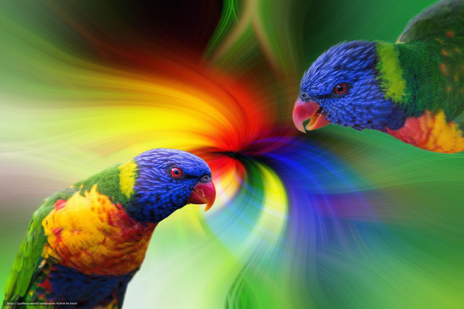 scaricare gli sfondi Multi Lorichetto,  Lorikeet,  pappagallo,  uccello Sfondi gratis per la risoluzione del desktop 1600x1066 — immagine №636976
