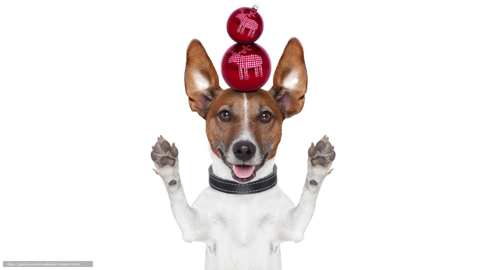 Descargar gratis perro,  Año Nuevo,  Bolas,  Decoraciones de Navidad Fondos de escritorio en la resolucin 7680x4320 — imagen №636991