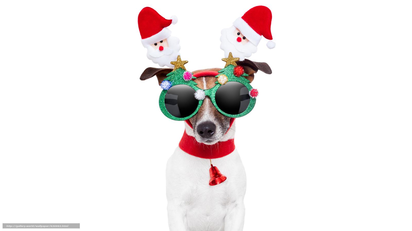 Descargar gratis perro,  Año Nuevo,  mascarada,  llanta Fondos de escritorio en la resolucin 7680x4320 — imagen №636992