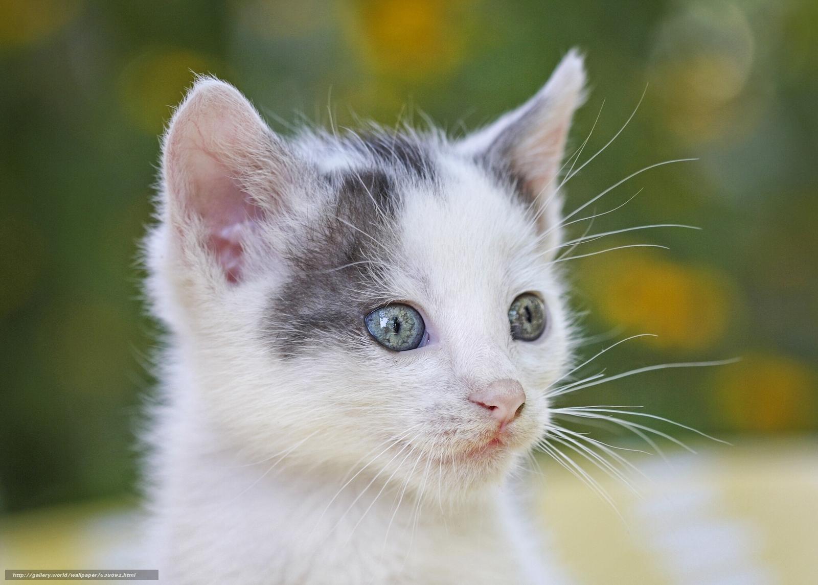 scaricare gli sfondi gattino,  museruola,  baffi,  visualizzare Sfondi gratis per la risoluzione del desktop 2048x1466 — immagine №638092
