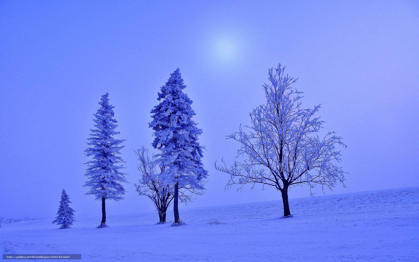 Скачать обои зима,  закат,  поле,  деревья бесплатно для рабочего стола в разрешении 2048x1280 — картинка №638155