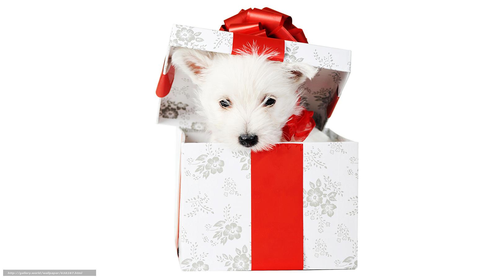 Descargar gratis perro,  cachorro,  blanco,  caja Fondos de escritorio en la resolucin 7680x4320 — imagen №638287
