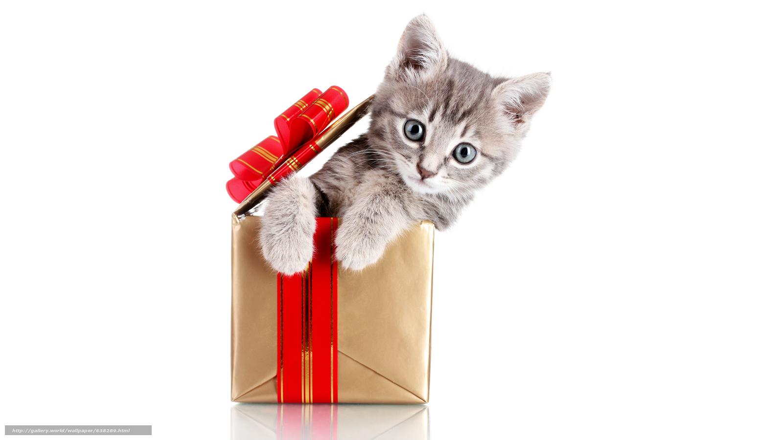 Descargar gratis gato,  gatito,  Gris,  caja Fondos de escritorio en la resolucin 7680x4320 — imagen №638289