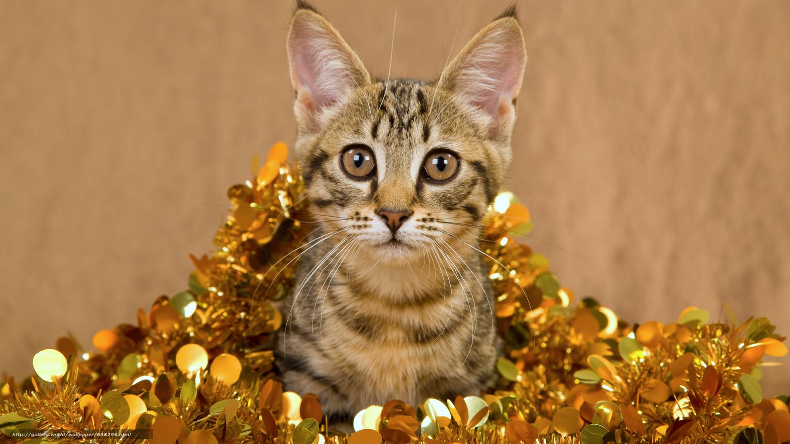 Descargar gratis gato,  COTE,  Gris,  a rayas Fondos de escritorio en la resolucin 7680x4320 — imagen №638296