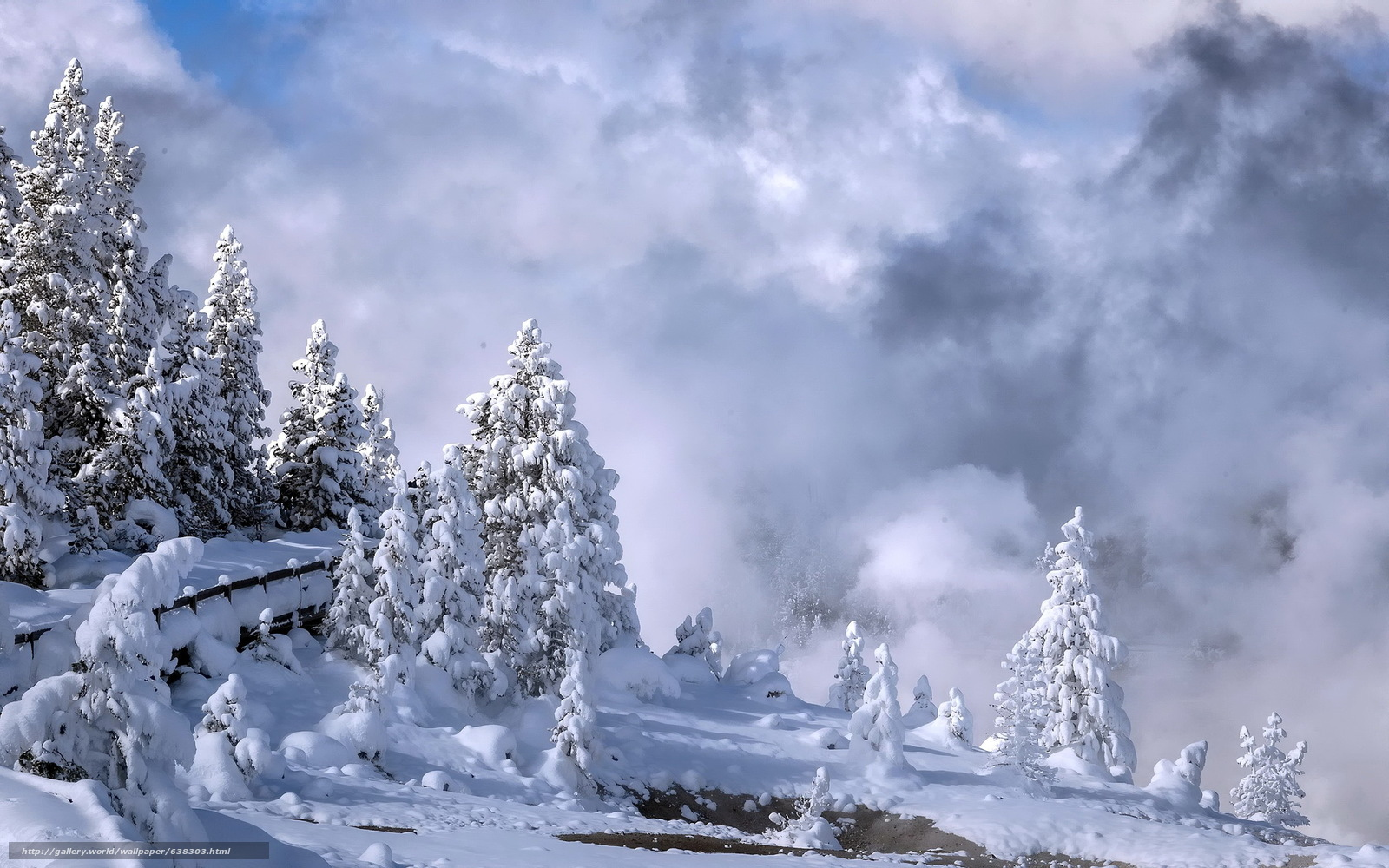 Download Wallpaper Yellowstone National Park Winter Trees