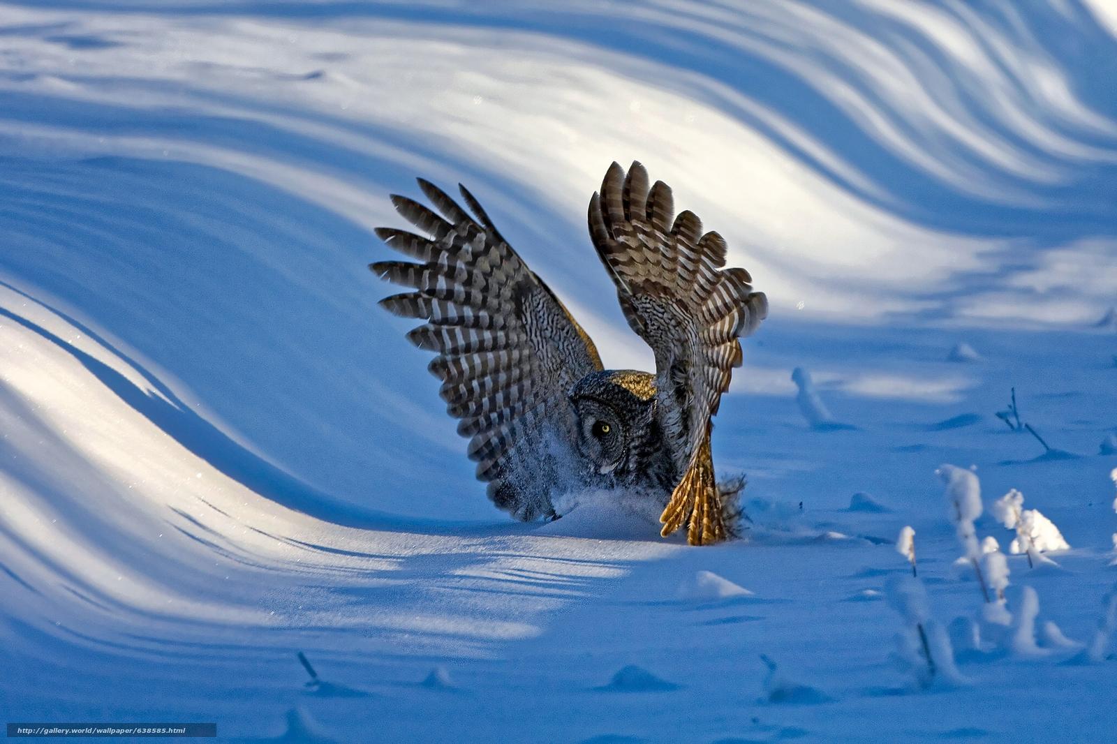 Download wallpaper Grey Owl,  owl,  bird,  wings free desktop wallpaper in the resolution 2048x1365 — picture №638585