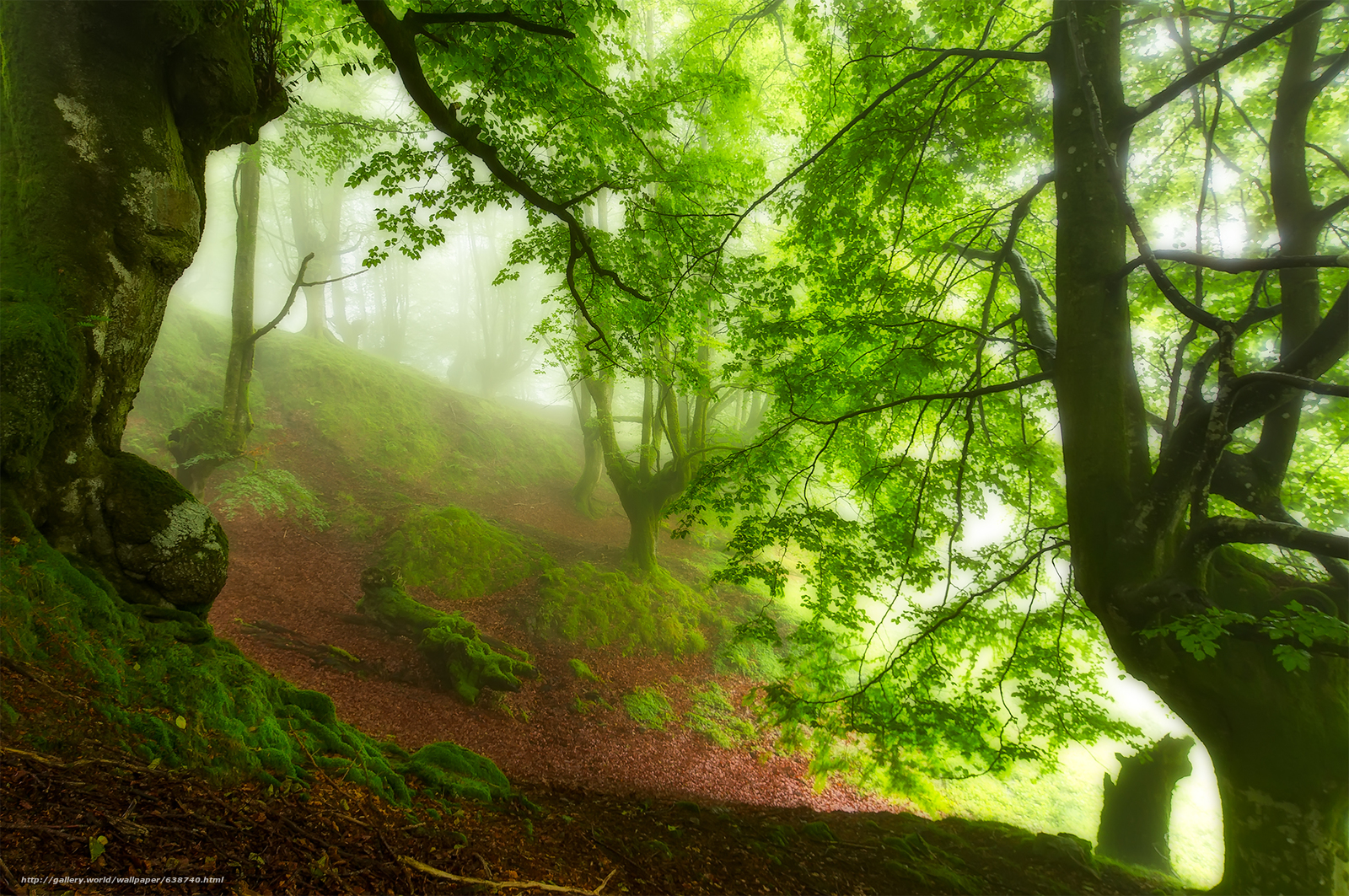 Download wallpaper forest,  trees,  fog,  nature free desktop wallpaper in the resolution 1920x1276 — picture №638740