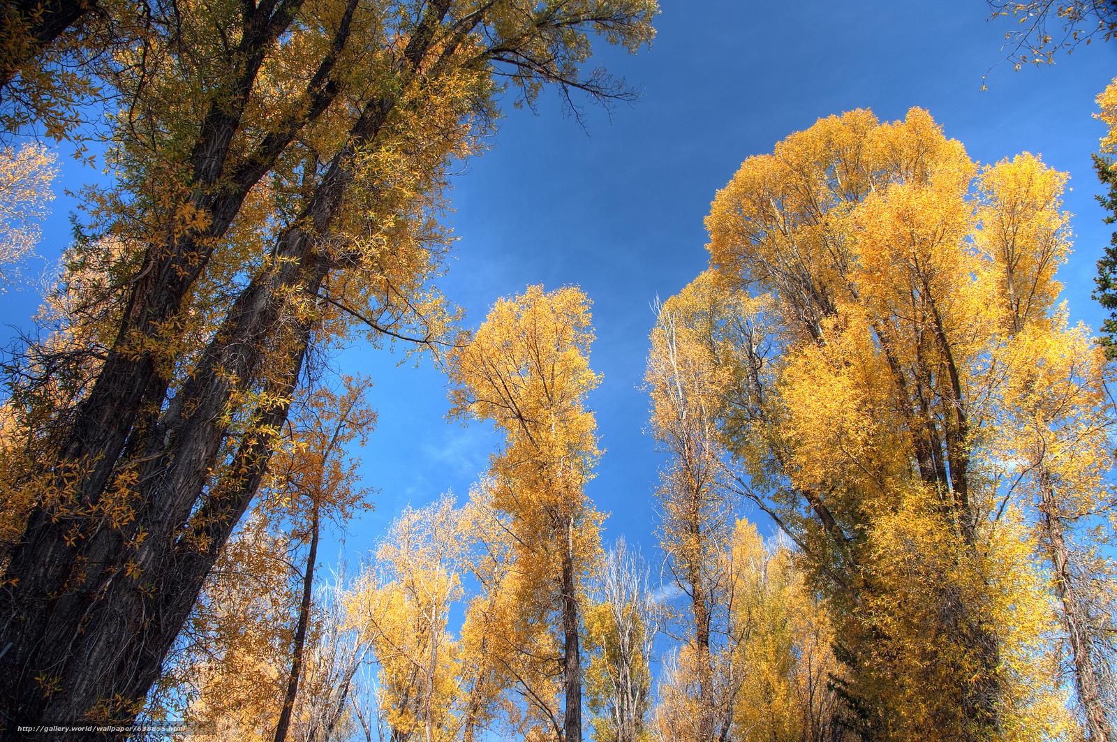 scaricare gli sfondi Dorato Aspens,  Grand Tetons,  Wyoming,  autunno Sfondi gratis per la risoluzione del desktop 2048x1360 — immagine №638855