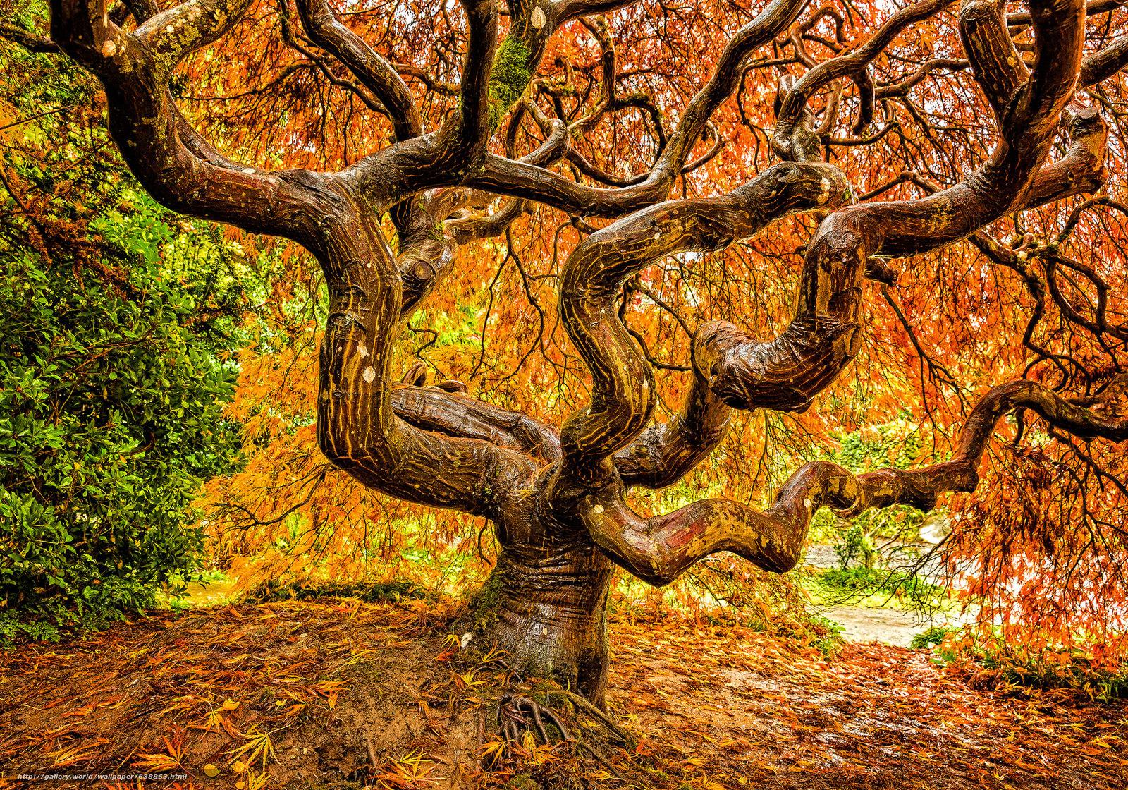 Download wallpaper Kubota Garden, Seattle, garden, park.derevo free ...
