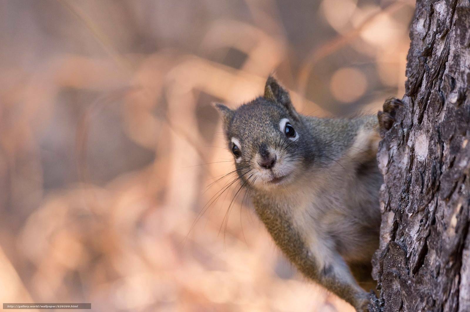scaricare gli sfondi scoiattolo,  museruola,  visualizzare,  albero Sfondi gratis per la risoluzione del desktop 2048x1360 — immagine №639399