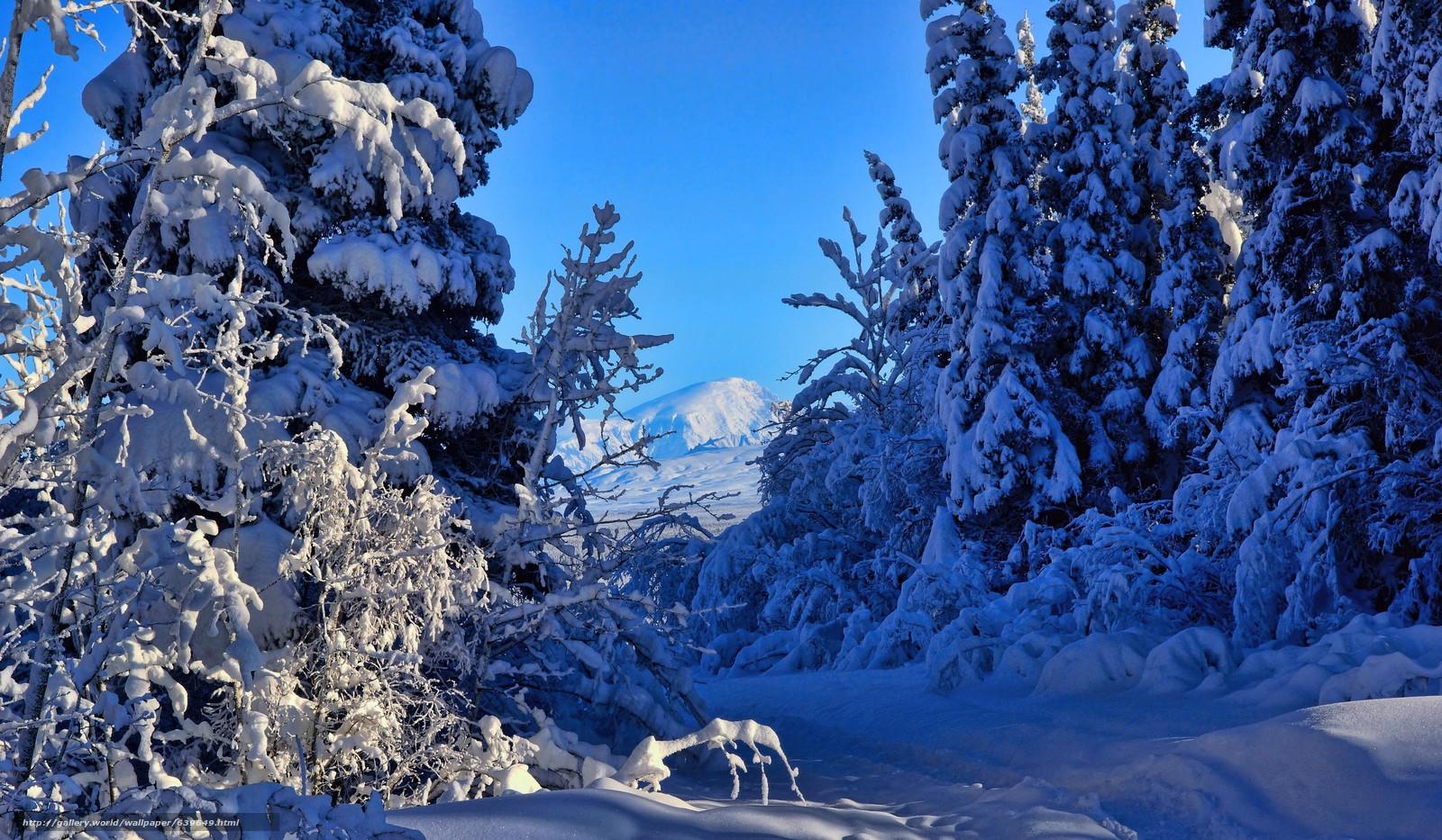 Tlcharger fond d 39 ecran hiver neige arbres alaska fonds for Fond ecran hiver hd