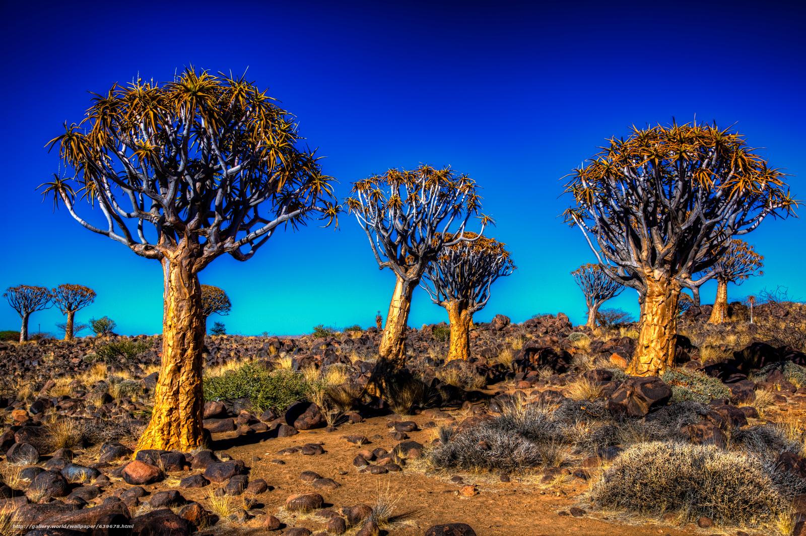 Descargar gratis Kalahari,  Árbol de la aljaba,  campo,  paisaje Fondos de escritorio en la resolucin 5710x3798 — imagen №639678