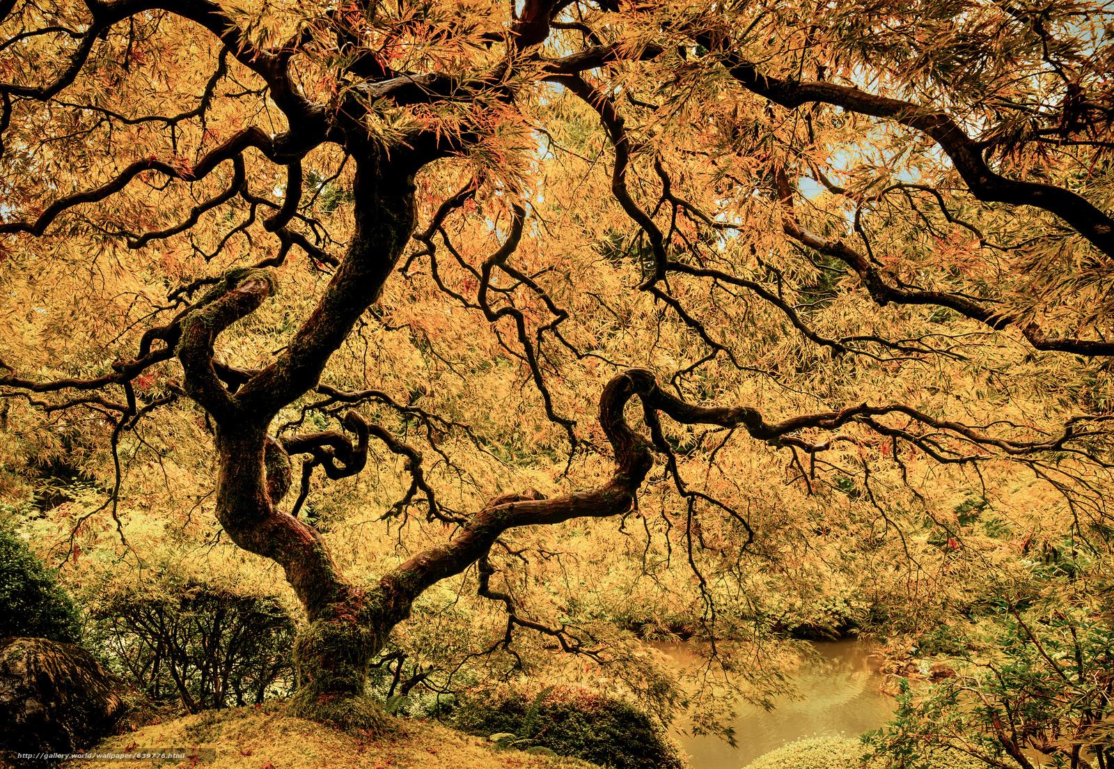 Tlcharger fond d 39 ecran jardin japonais portland oregon for Jardin japonais fond d ecran