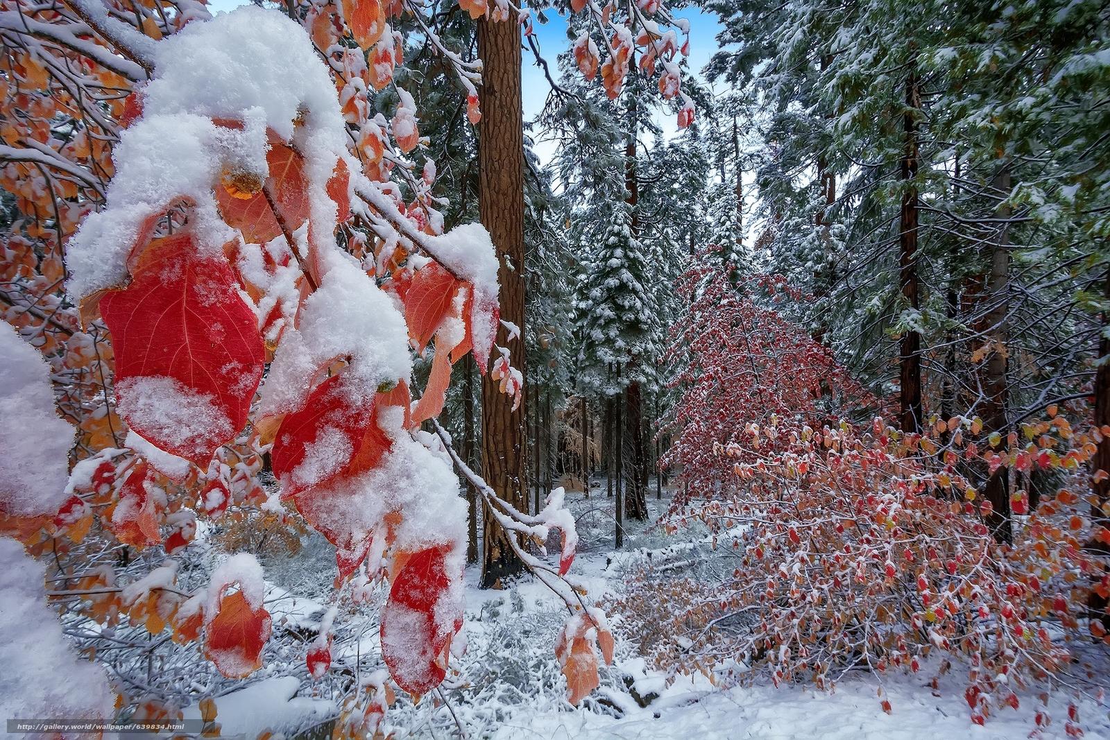 обои для рабочего стола первый снег природа 2746