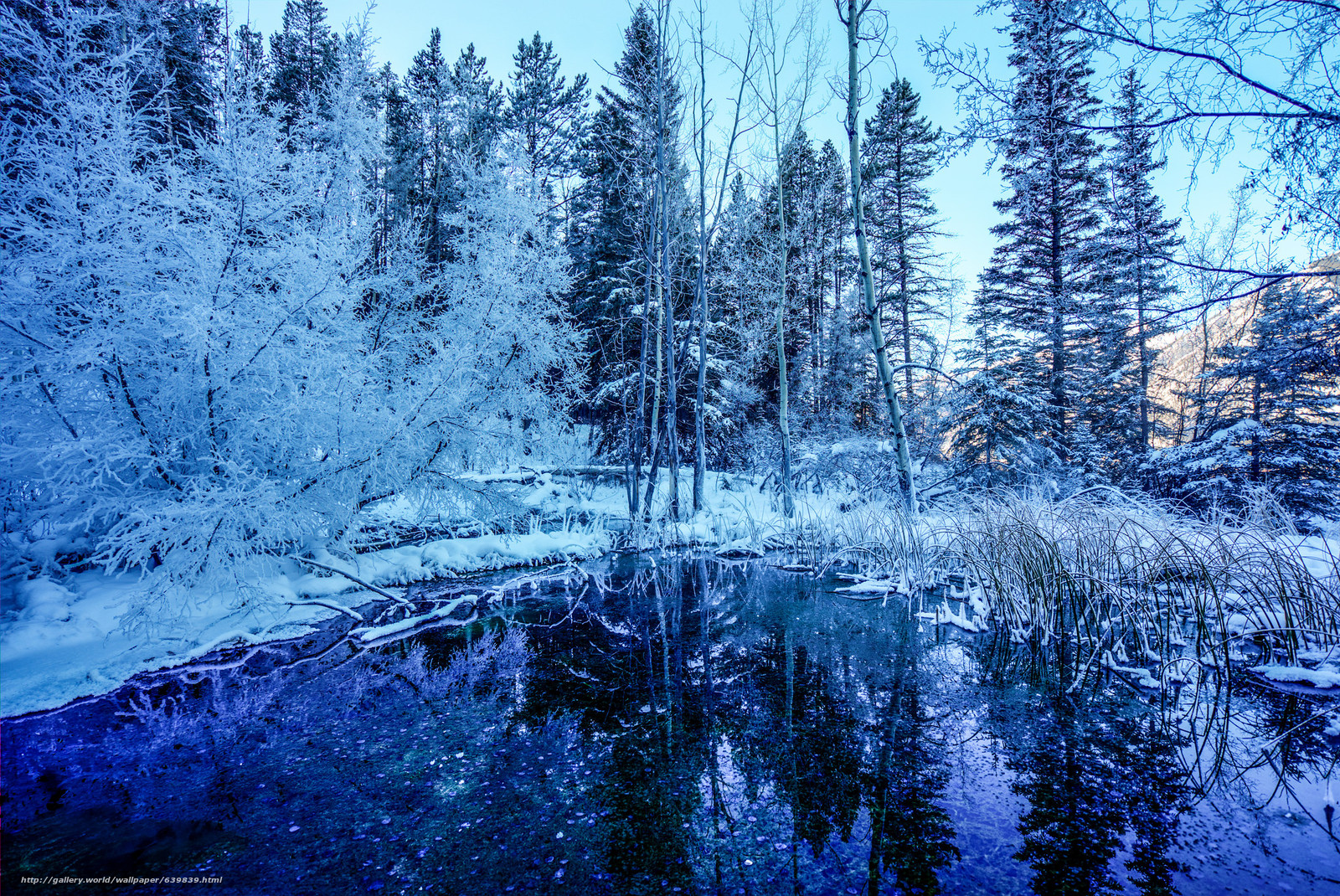 Download wallpaper winter,  pond,  forest,  trees free desktop wallpaper in the resolution 2048x1369 — picture №639839