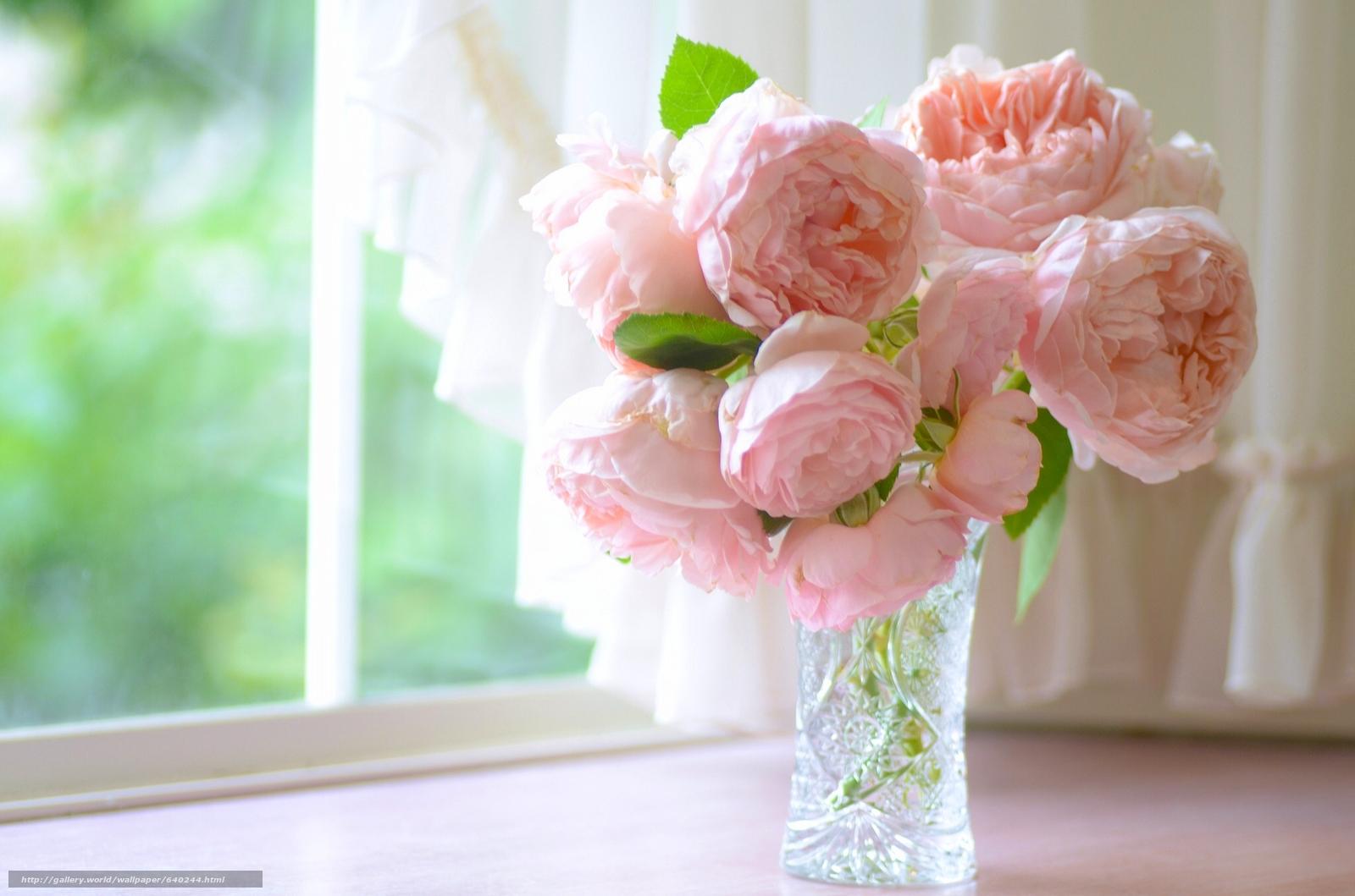 обои для рабочего стола пионы розы № 422837  скачать