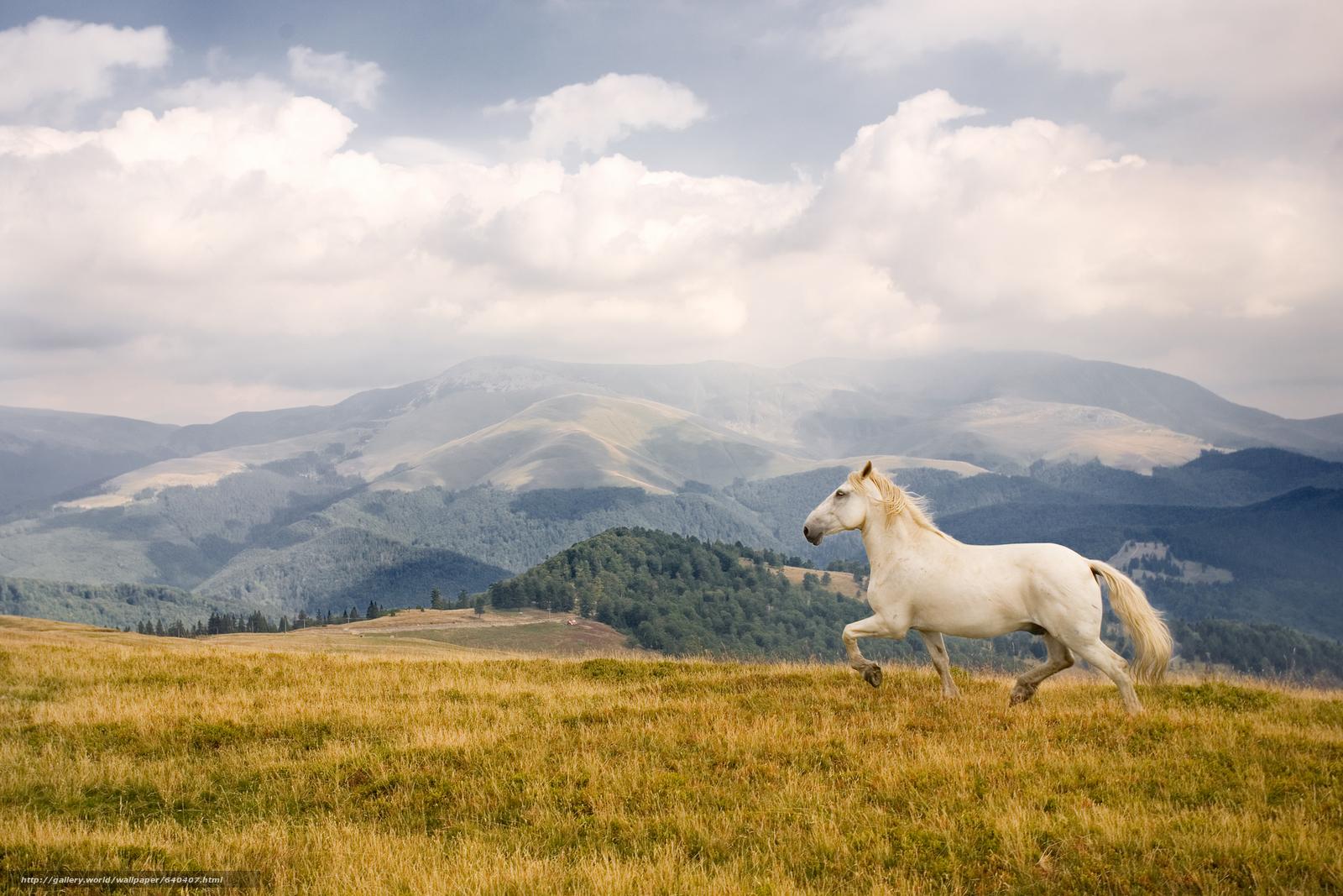 Scaricare gli sfondi cavallo cavalli cavallo cavallo for Sfondi cavalli gratis
