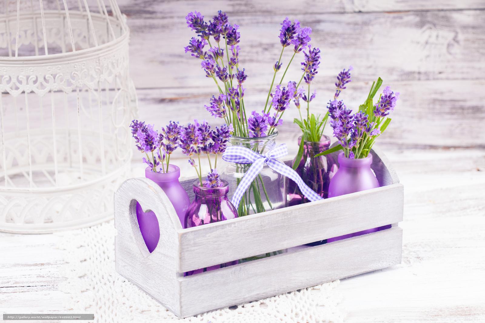Скачать обои цветы,  лаванда,  растение,  флора бесплатно для рабочего стола в разрешении 5616x3744 — картинка №640982