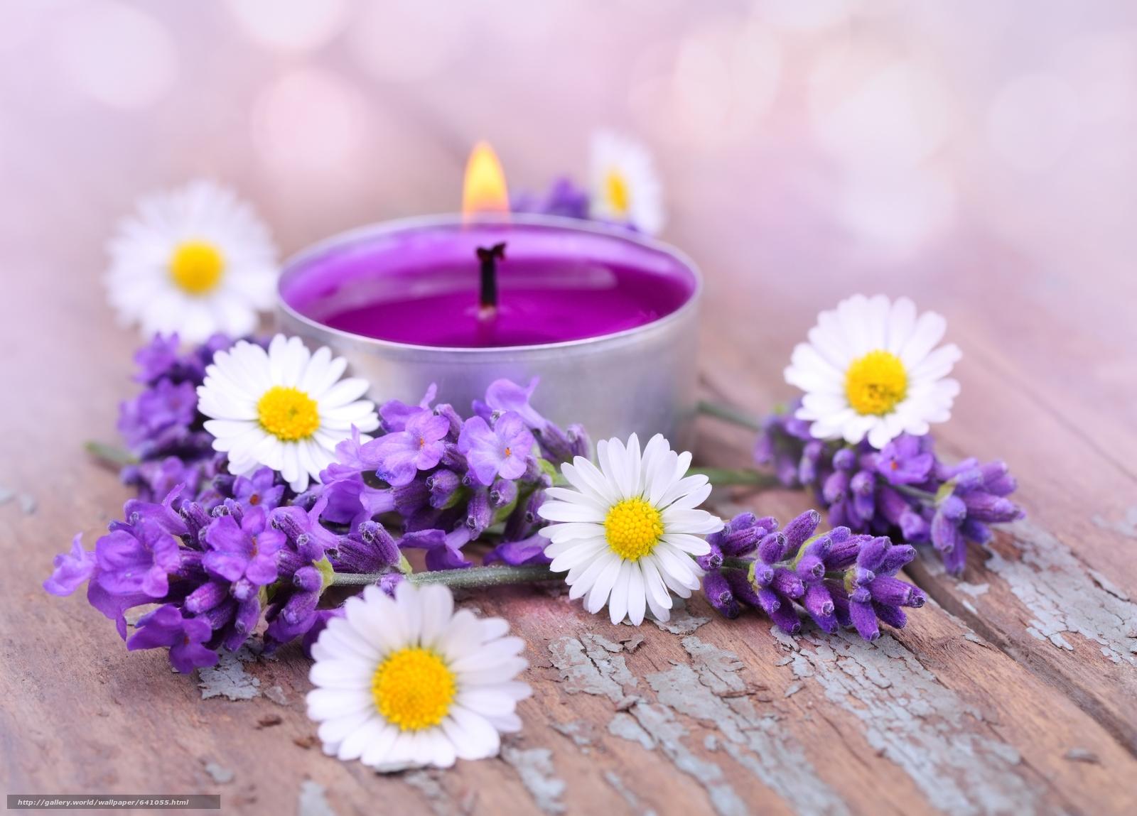 Скачать обои цветы,  лаванда,  ромашки,  свеча бесплатно для рабочего стола в разрешении 6272x4504 — картинка №641055