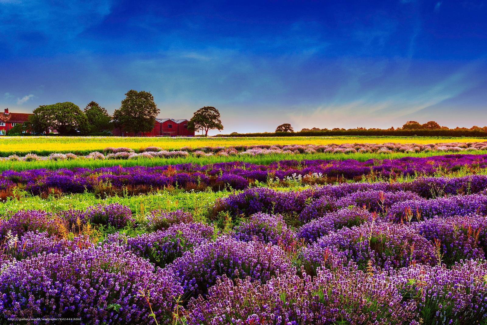 Scaricare gli sfondi fiori paesaggio natura lavanda for Immagini sfondo desktop primavera