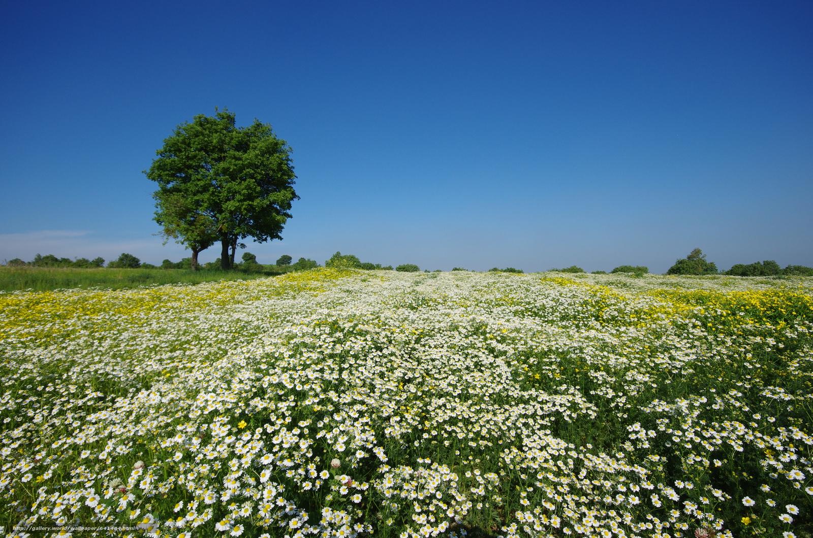 Download wallpaper field,  Flowers,  tree,  landscape free desktop wallpaper in the resolution 4928x3264 — picture №641464