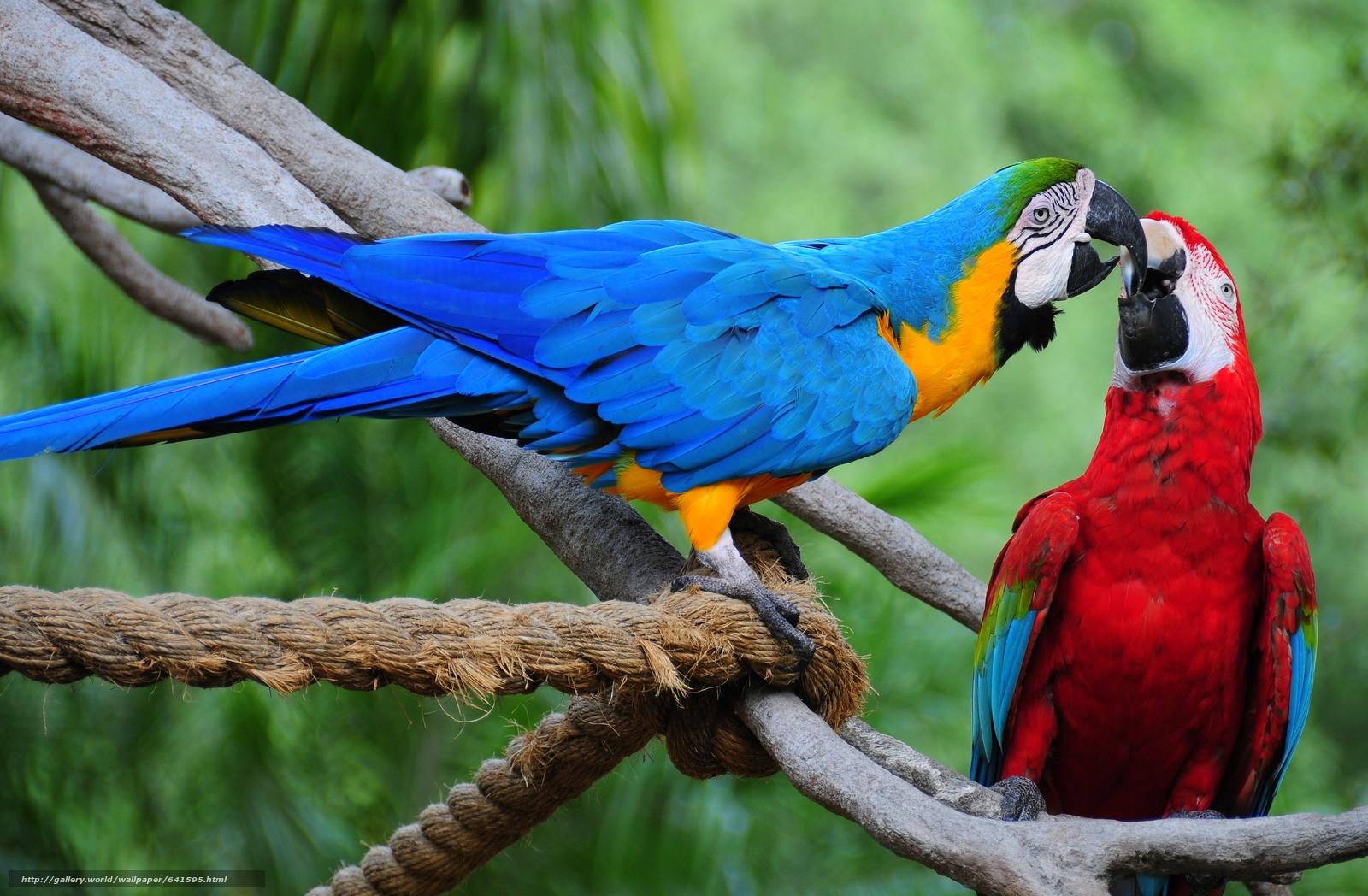 scaricare gli sfondi Blu e giallo Ara,  Pappagalli,  uccelli Sfondi gratis per la risoluzione del desktop 3850x2521 — immagine №641595