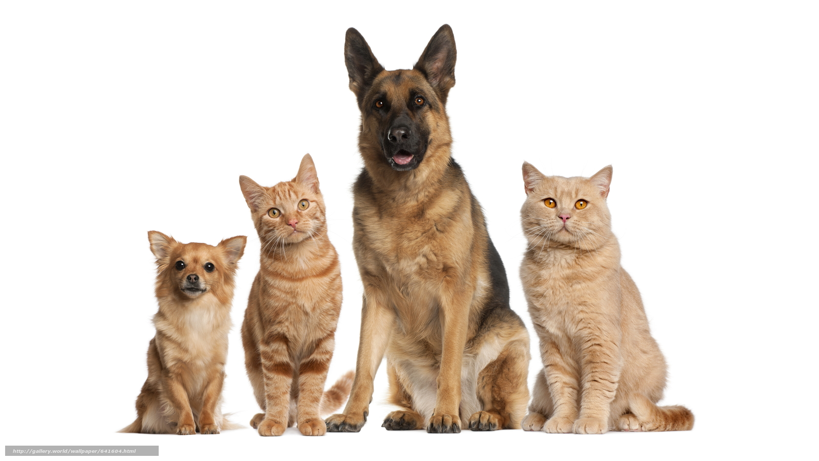 Download wallpaper animals,  Dog,  cat,  cats free desktop wallpaper in the resolution 7293x4102 — picture №641604
