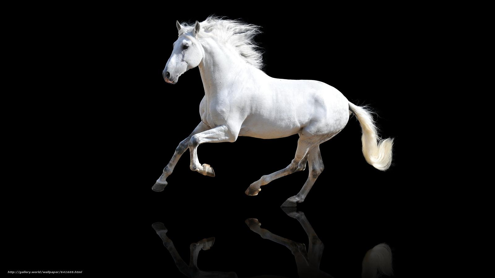 Скачать обои животные,  кони,  лошади,  конь бесплатно для рабочего стола в разрешении 9614x5407 — картинка №641605