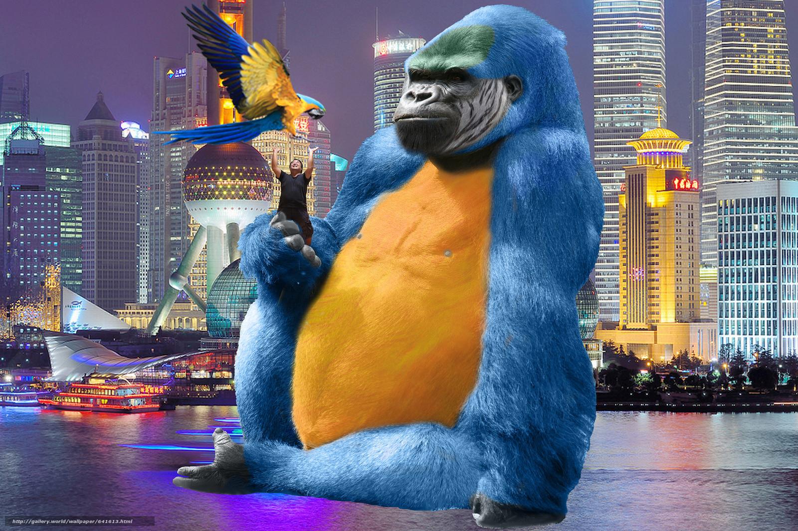 scaricare gli sfondi Photoshop,  King Kong,  scimmia,  pappagallo Sfondi gratis per la risoluzione del desktop 2048x1365 — immagine №641613