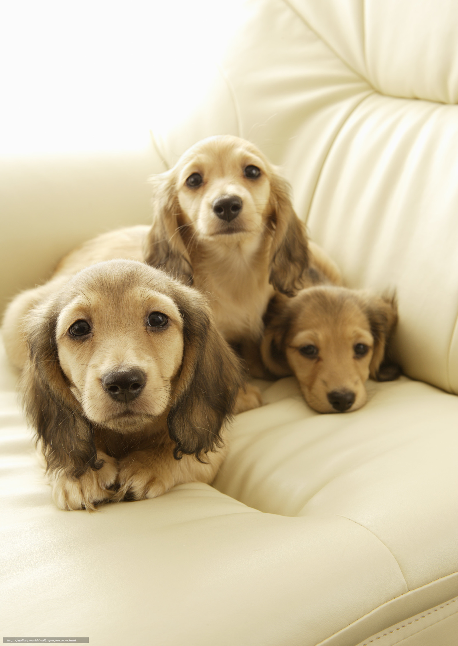 scaricare gli sfondi Cane,  cane,  cane,  cucciolo Sfondi gratis per la risoluzione del desktop 2094x2950 — immagine №641674