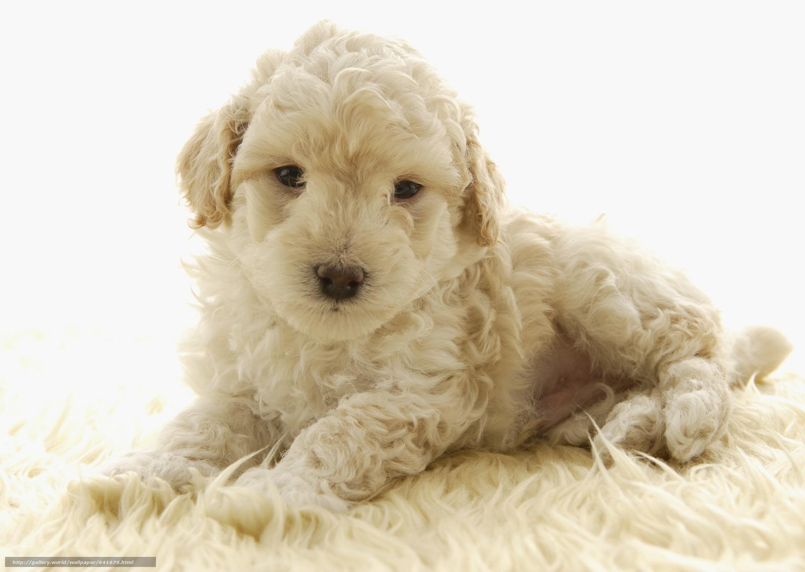 scaricare gli sfondi Cane,  cane,  cane,  cucciolo Sfondi gratis per la risoluzione del desktop 2950x2094 — immagine №641675
