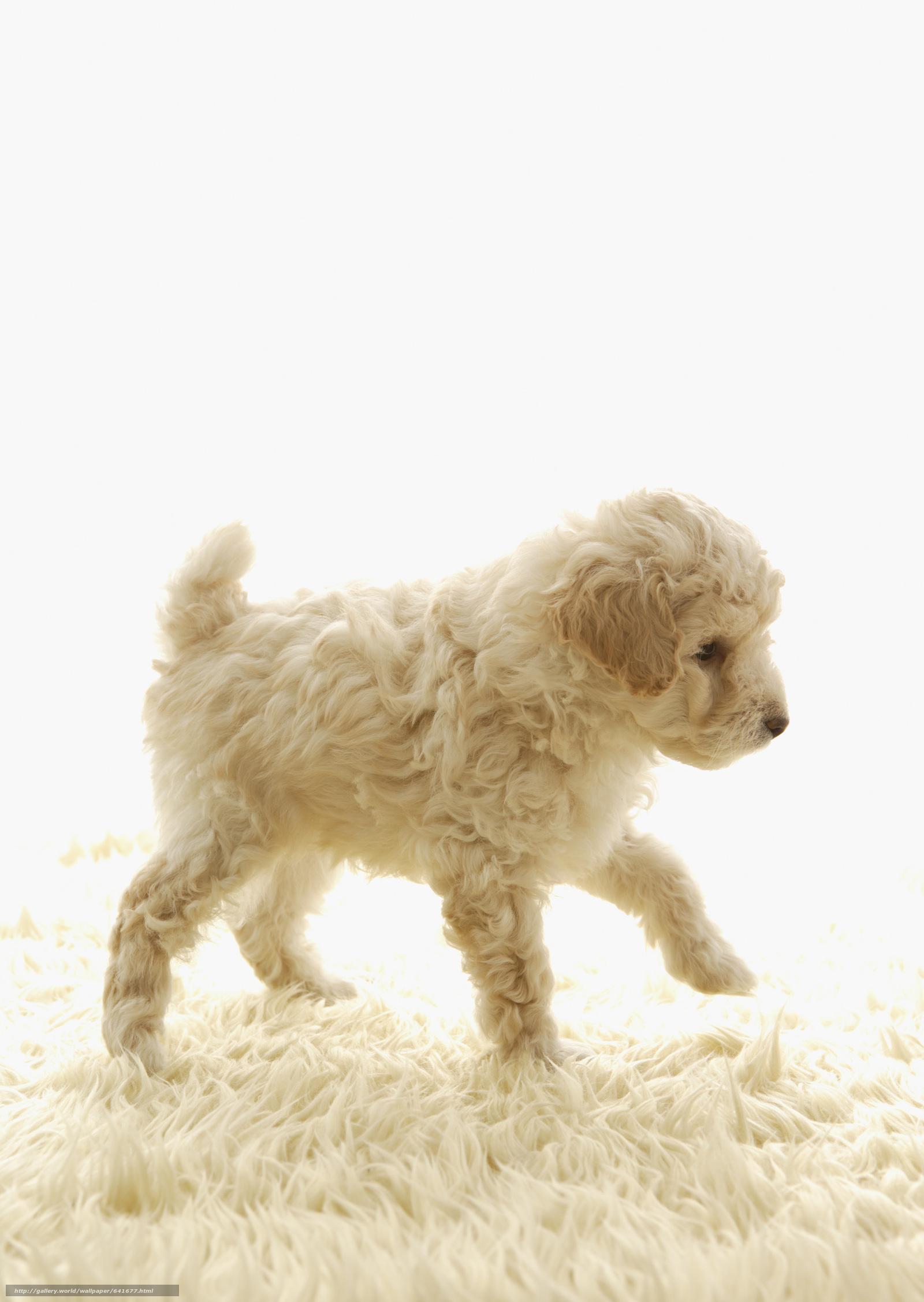 scaricare gli sfondi Cane,  cane,  cane,  cucciolo Sfondi gratis per la risoluzione del desktop 2094x2950 — immagine №641677