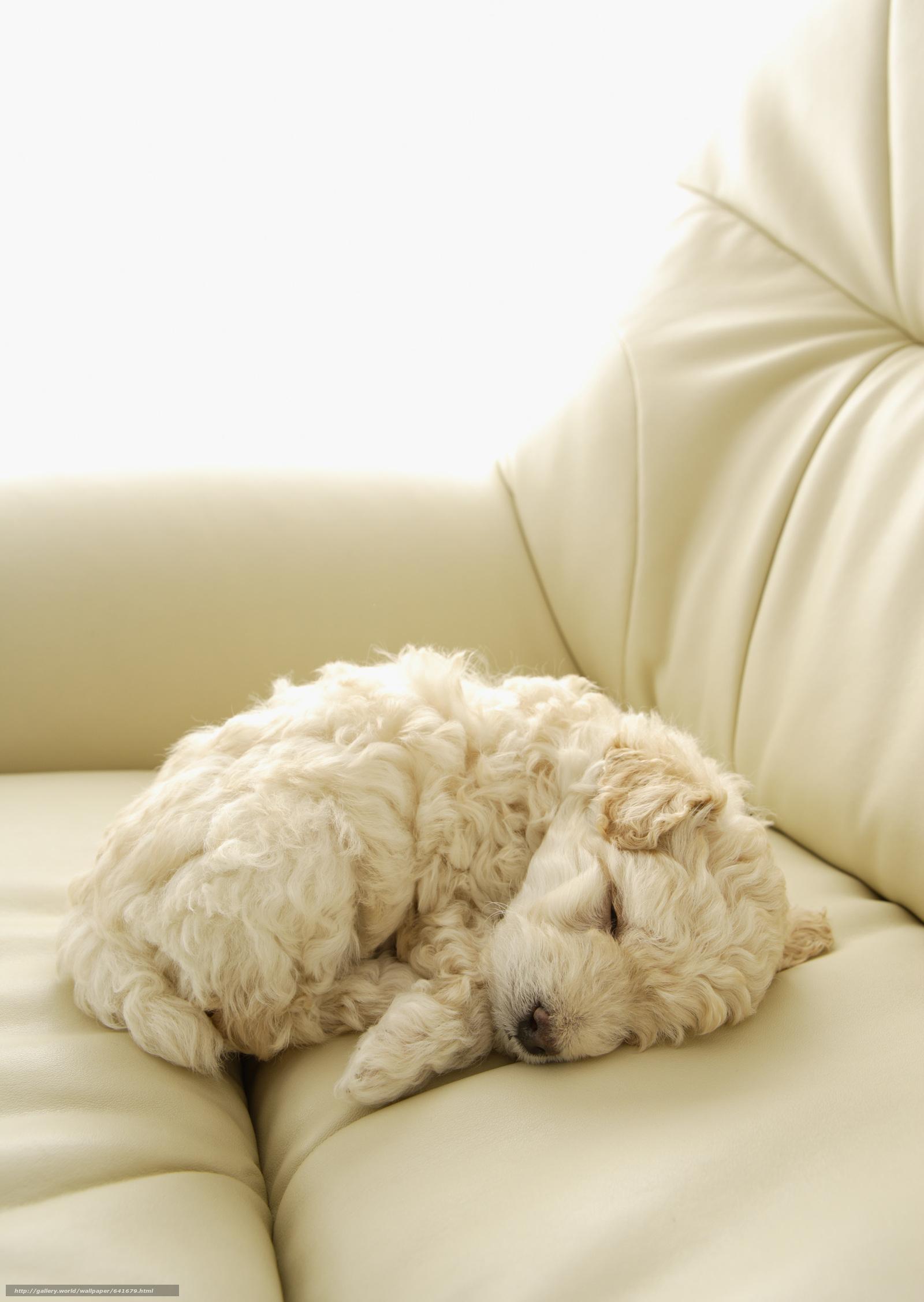 scaricare gli sfondi Cane,  cane,  cane,  cucciolo Sfondi gratis per la risoluzione del desktop 2094x2950 — immagine №641679