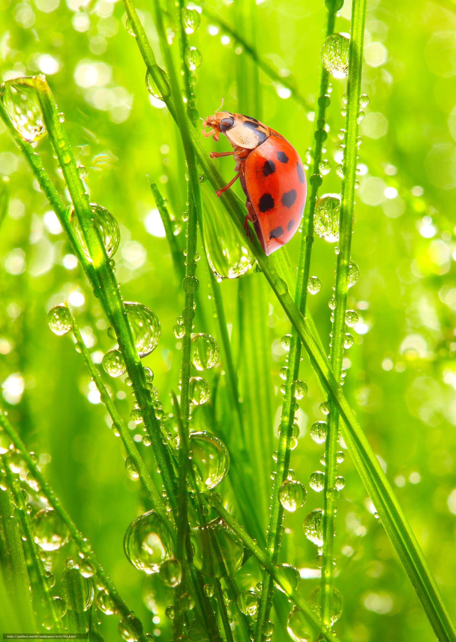 下载壁纸 在花园里的瓢虫,  光,  太阳,  新鲜的空气 免费为您的桌面分辨率的壁纸 3482x4900 — 图片 №641702