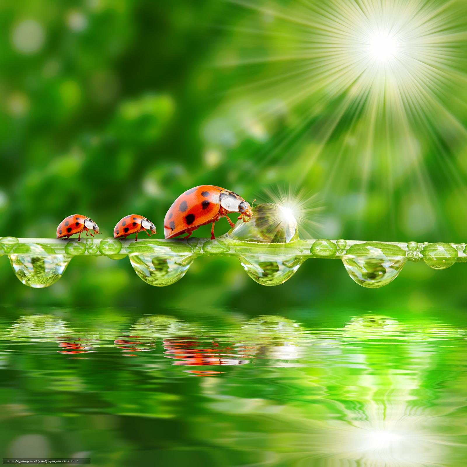 Скачать обои божьи коровки в раю,  свет,  солнце,  свежий воздух бесплатно для рабочего стола в разрешении 2060x2060 — картинка №641708
