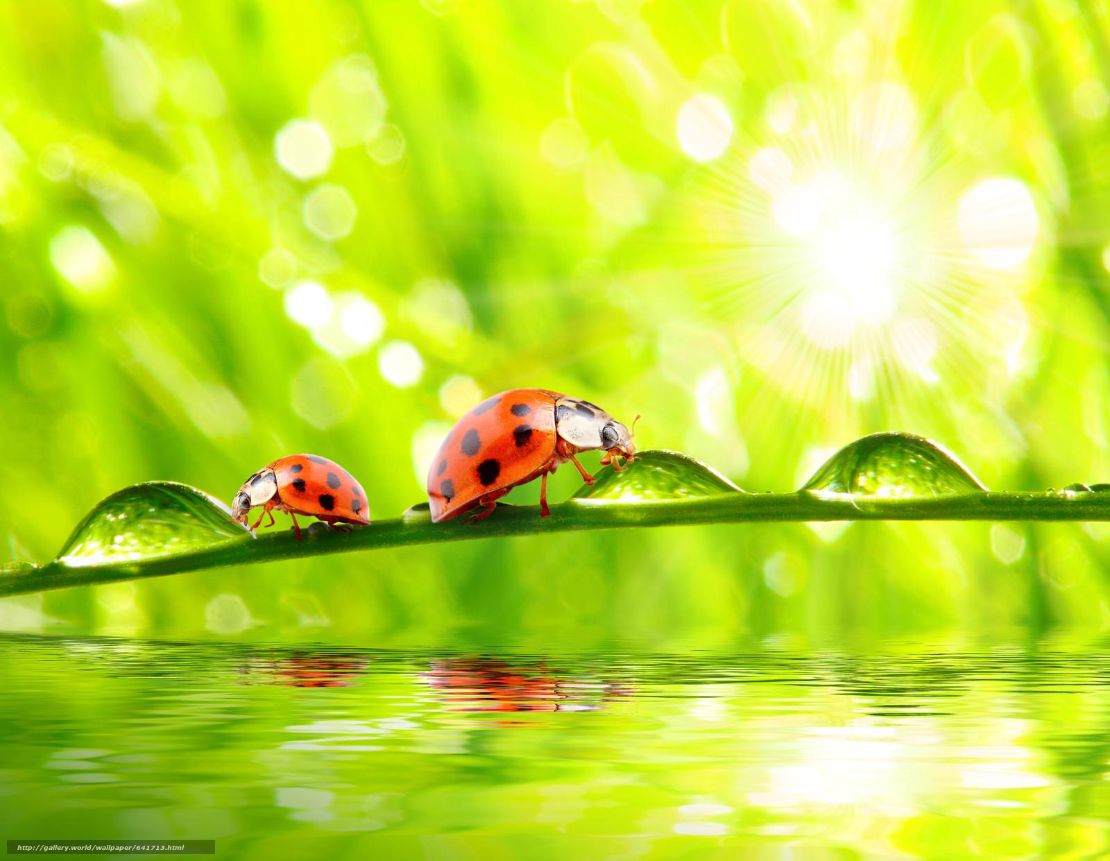 Скачать обои божьи коровки в раю,  свет,  солнце,  свежий воздух бесплатно для рабочего стола в разрешении 5224x4052 — картинка №641713