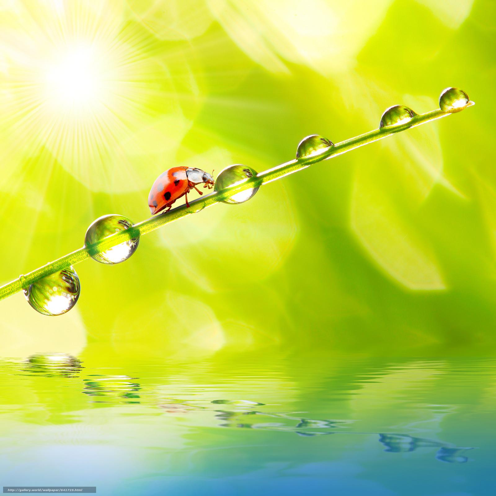 Скачать обои божьи коровки в раю,  свет,  солнце,  свежий воздух бесплатно для рабочего стола в разрешении 4120x4120 — картинка №641725