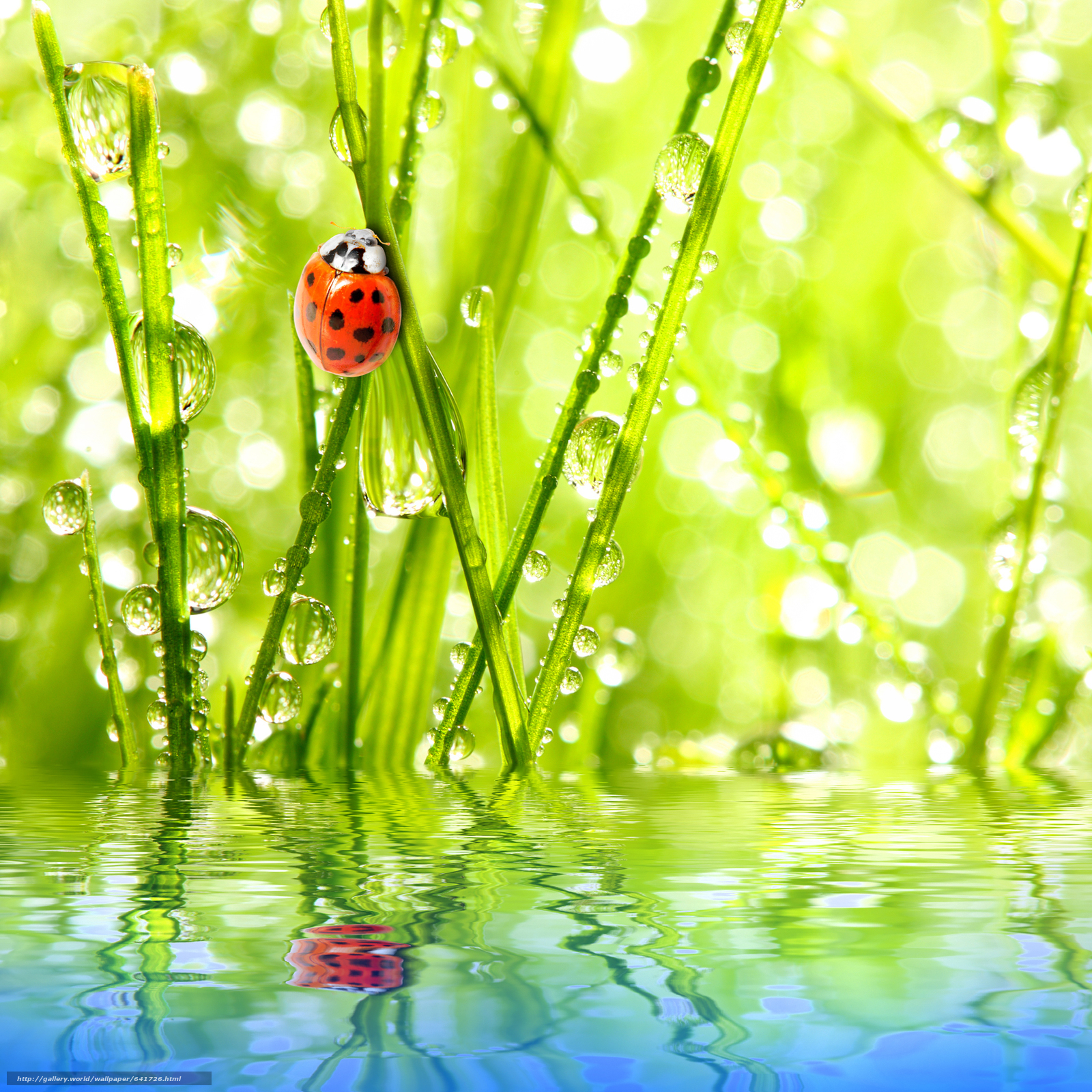 Скачать обои божьи коровки в раю,  свет,  солнце,  свежий воздух бесплатно для рабочего стола в разрешении 4120x4120 — картинка №641726