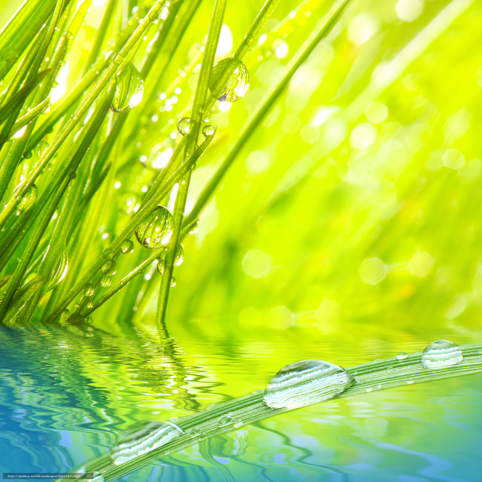 scaricare gli sfondi Macro,  natura,  gocce,  rugiada Sfondi gratis per la risoluzione del desktop 4120x4120 — immagine №641737