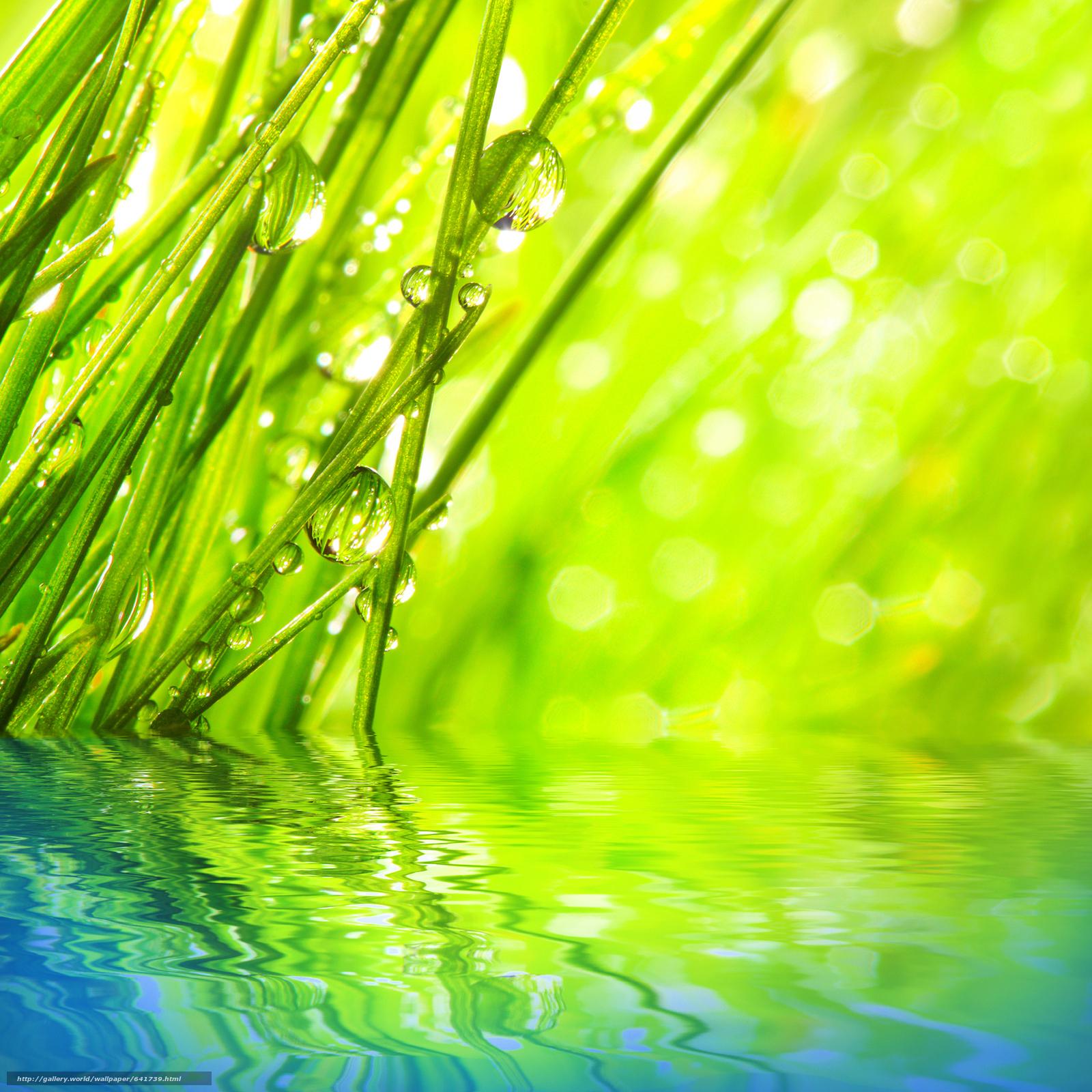 scaricare gli sfondi Macro,  natura,  gocce,  rugiada Sfondi gratis per la risoluzione del desktop 4120x4120 — immagine №641739