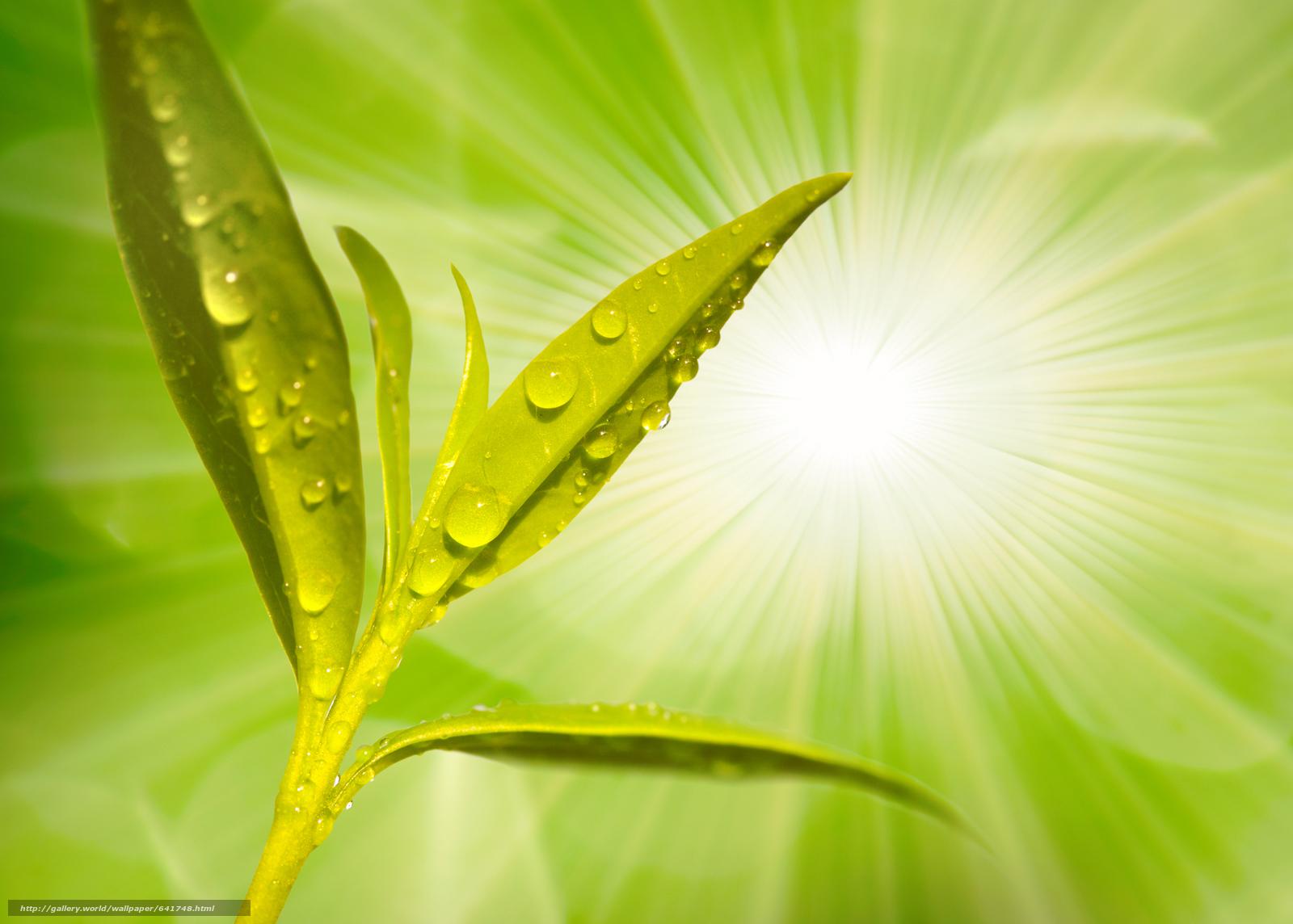 Download wallpaper Macro,  nature,  drops,  dew free desktop wallpaper in the resolution 2450x1752 — picture №641748