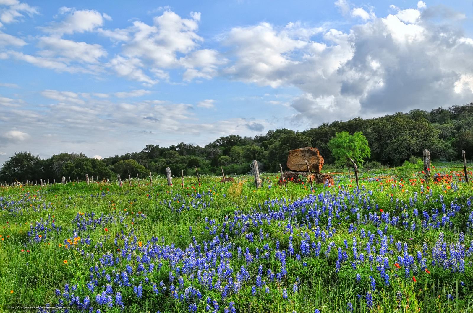 Descargar gratis Flores silvestres,  Pimpinela,  Texas Fondos de escritorio en la resolucin 2048x1358 — imagen №643014