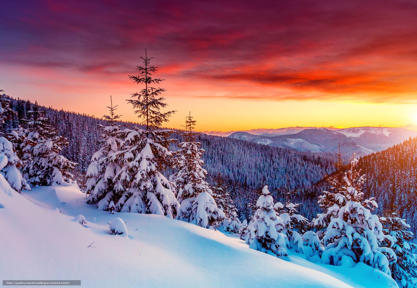 下载壁纸 日落,  冬天,  山,  树 免费为您的桌面分辨率的壁纸 7256x5008 — 图片 №643104