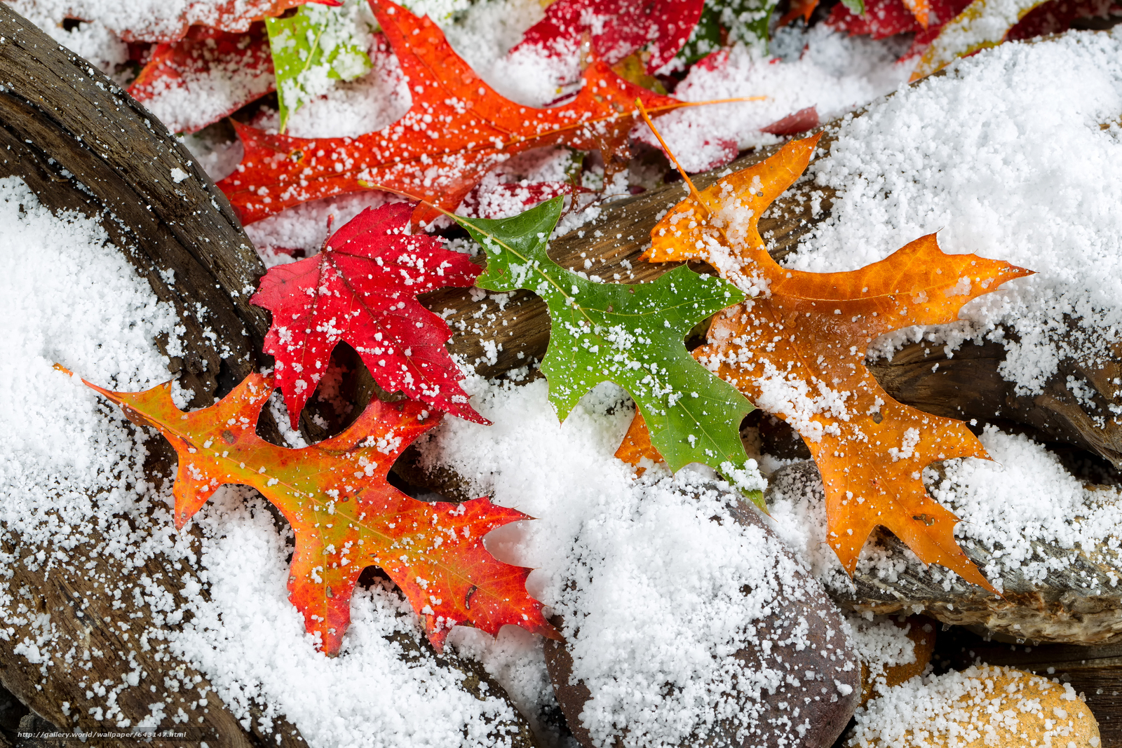 Download wallpaper first snow,  autumn leaves,  nature free desktop wallpaper in the resolution 4896x3264 — picture №643147