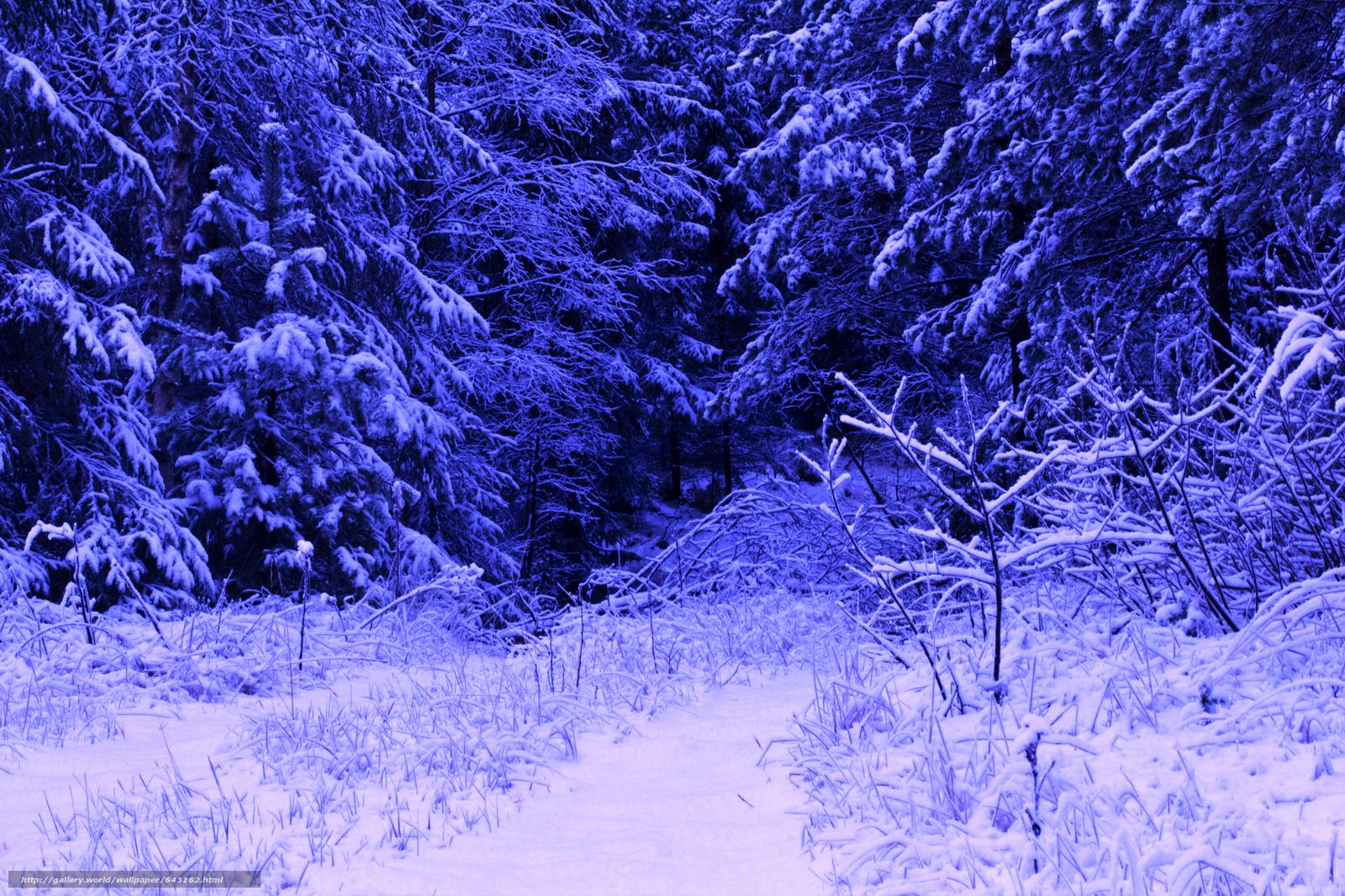 壁紙をダウンロード 冬,  森,  雪,  木 デスクトップの解像度のための無料壁紙 5184x3456 — 絵 №643162