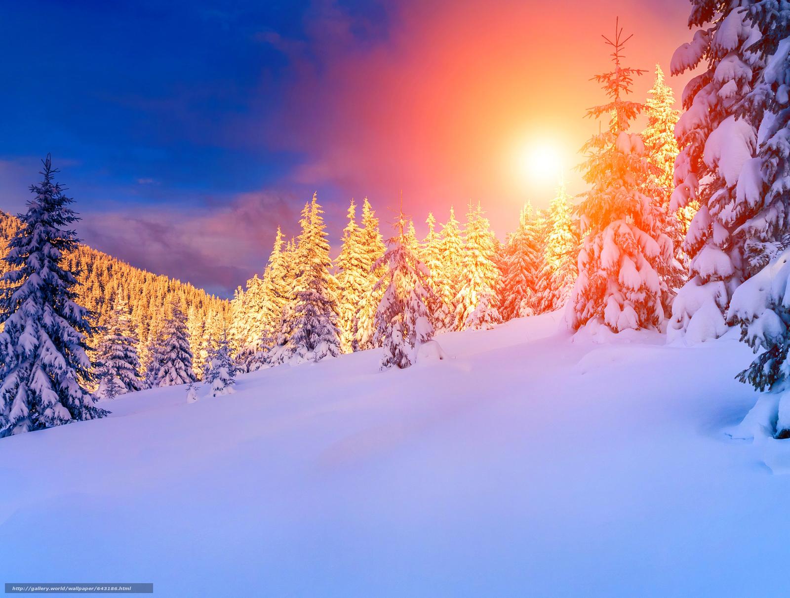 tlcharger fond d 39 ecran hiver coucher du soleil neige arbres fonds d 39 ecran gratuits pour votre. Black Bedroom Furniture Sets. Home Design Ideas