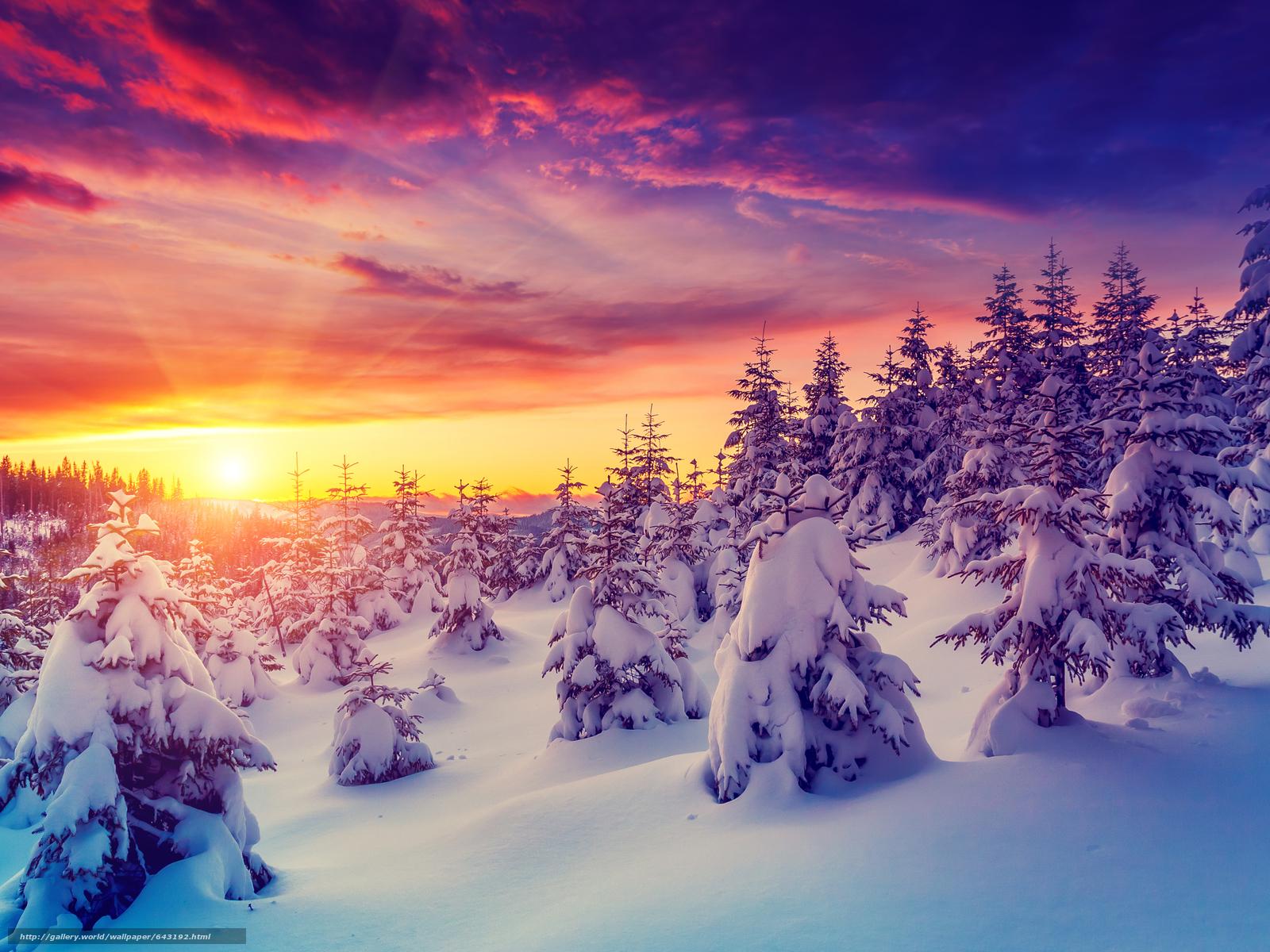 壁紙をダウンロード 冬,  日没,  雪,  木 デスクトップの解像度のための無料壁紙 3680x2760 — 絵 №643192