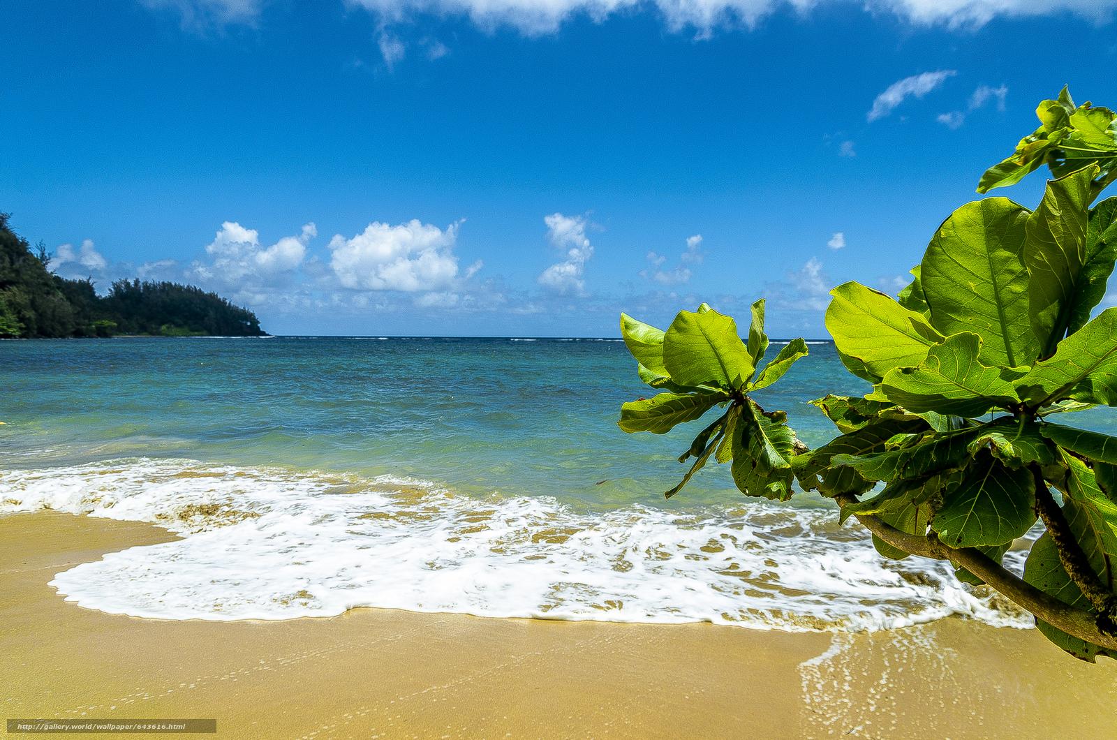 Download wallpaper Kauai Island,  Hawaiian Islands,  sea,  shore free desktop wallpaper in the resolution 4928x3264 — picture №643616