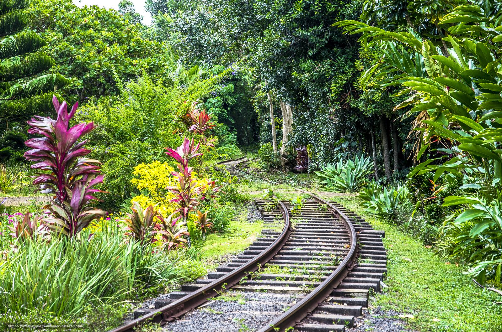 Download wallpaper Kauai Island,  Hawaiian Islands,  railroad,  forest free desktop wallpaper in the resolution 4928x3264 — picture №643618
